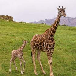 20% off One 1-Day Pass for One Adult or Child at San Diego Zoo Safari Park
